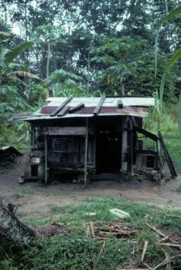 Rubber Plantation in Kuala Lumpur, Malaysia